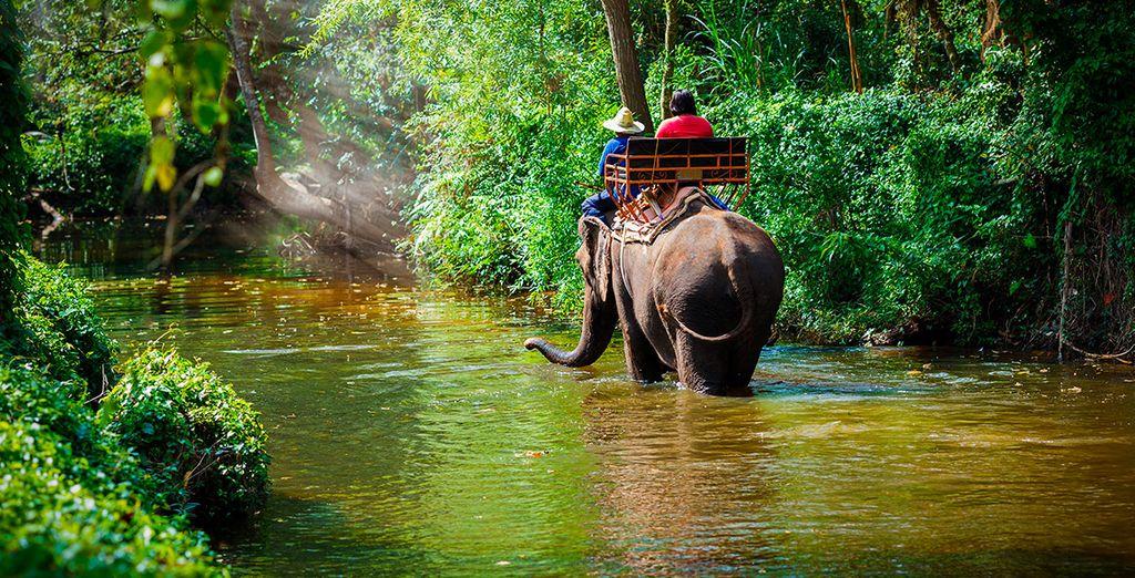 Vive una experiencia única a lomos de un elefante