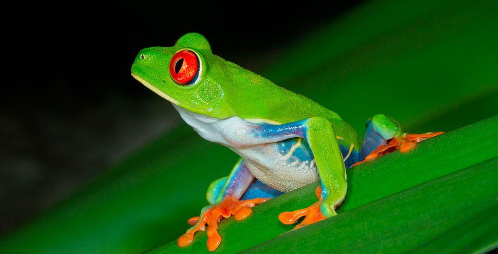 ... con una fauna y un colorido sorprendente