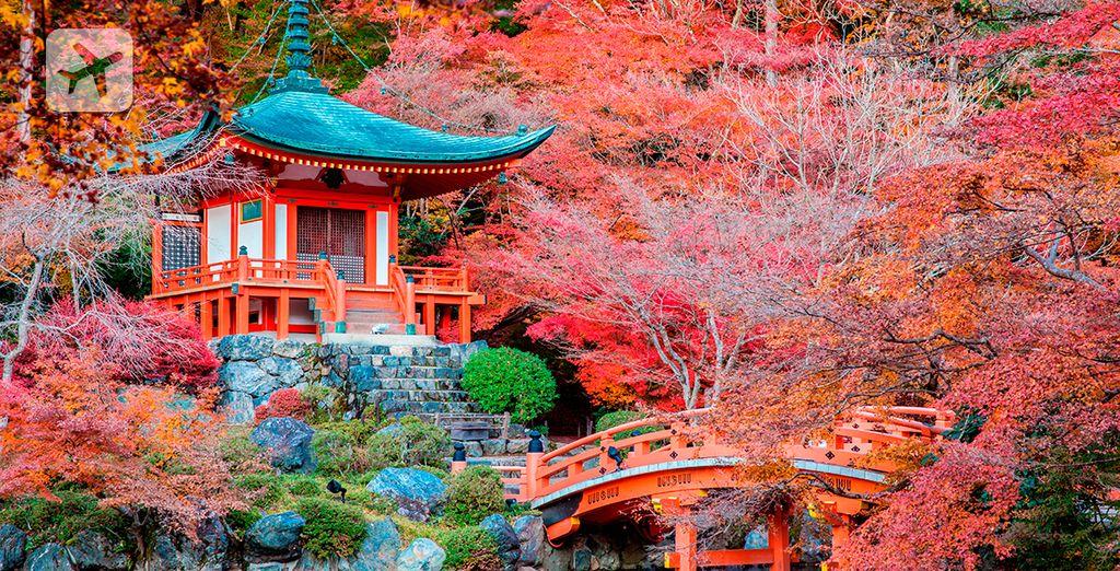 Bellos jardines de Kyoto