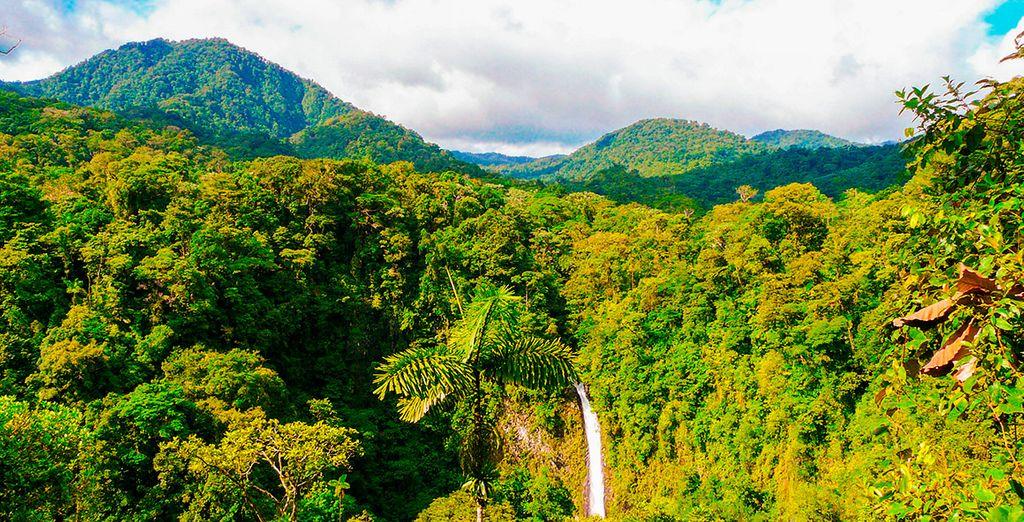 Experiencia en el bosque lluvioso Voyage Privé : hasta -70%