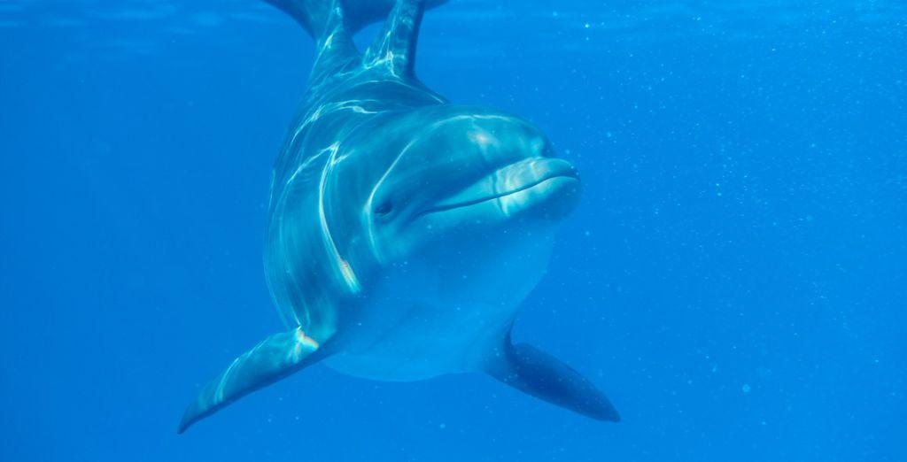 ...y avista los juguetones delfines
