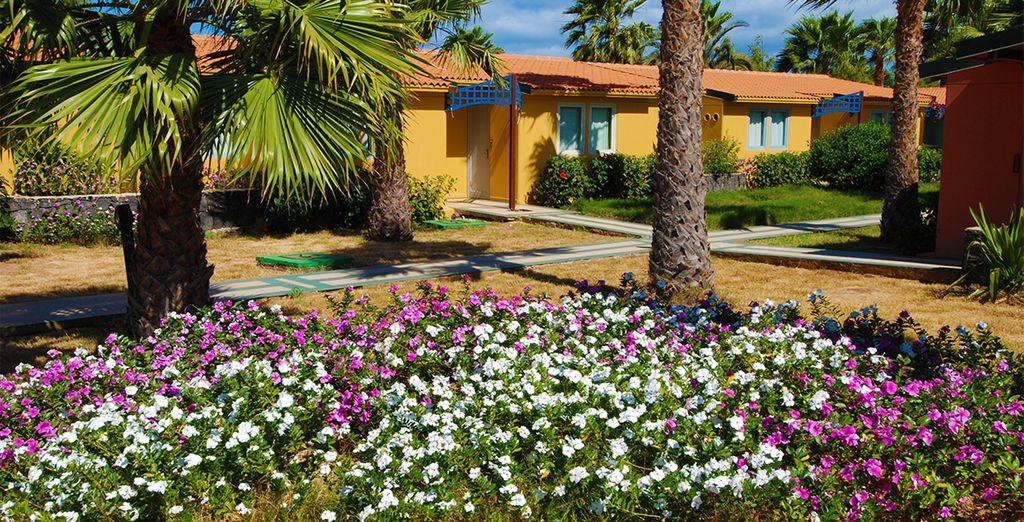 Pour un séjour en bungalow au milieu d'une nature luxuriante...