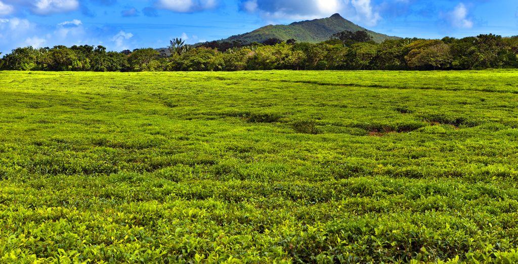 Paysage de l''Île Maurice et pars naturels idéals pour une randonnée en nature