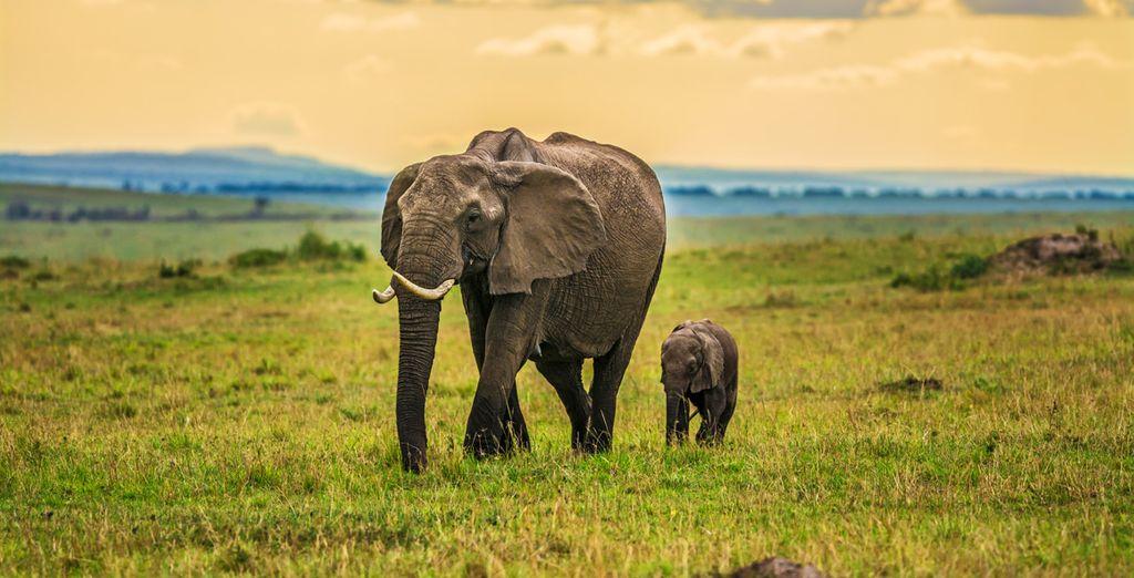 Paysages observés lors d'un safari au Kenya