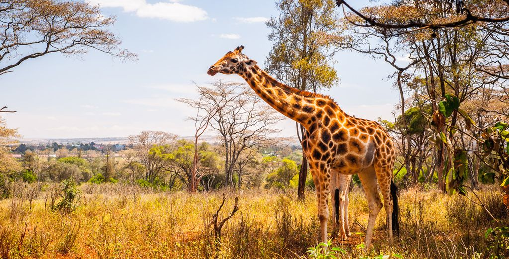 Vous terminerez votre séjour en beauté grâce à à un safari...