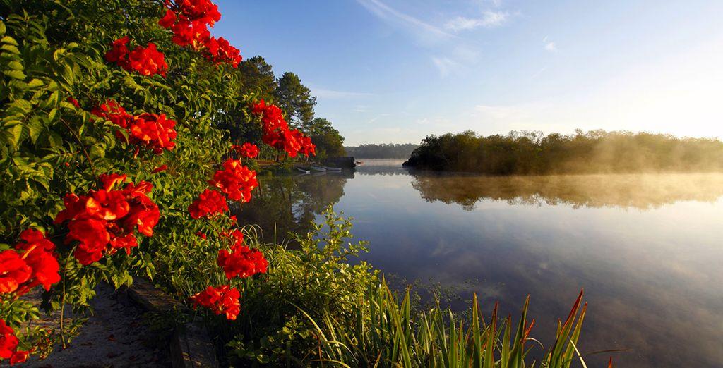 ou admirer les paysages de la promenade fleurie de Mimizan.