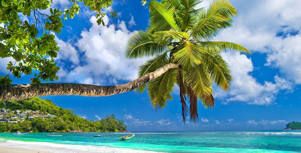 Sous le beau soleil des Seychelles... - Croisière aux Seychelles