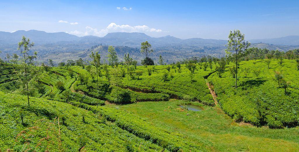 Commencez par plonger au coeur de la nature luxuriante du Sri Lanka