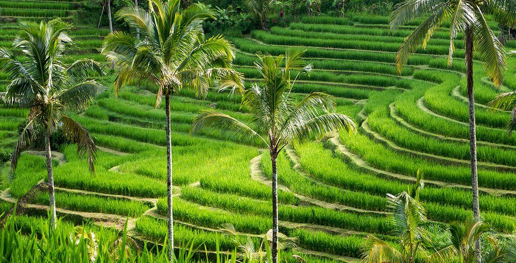 Sans oublier les incroyables paysages de Bali, et notamment ses rizières
