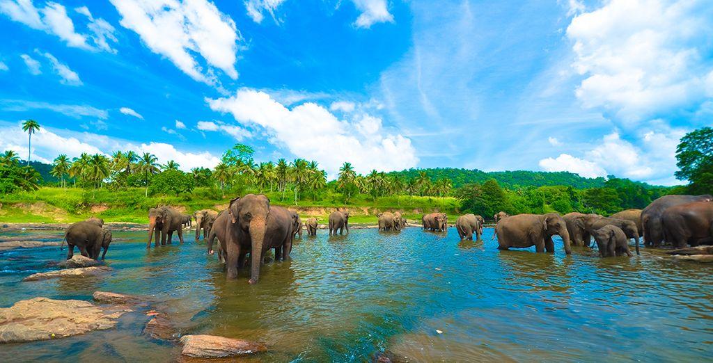 mais aussi la diversité de ses paysages naturels et de sa faune !