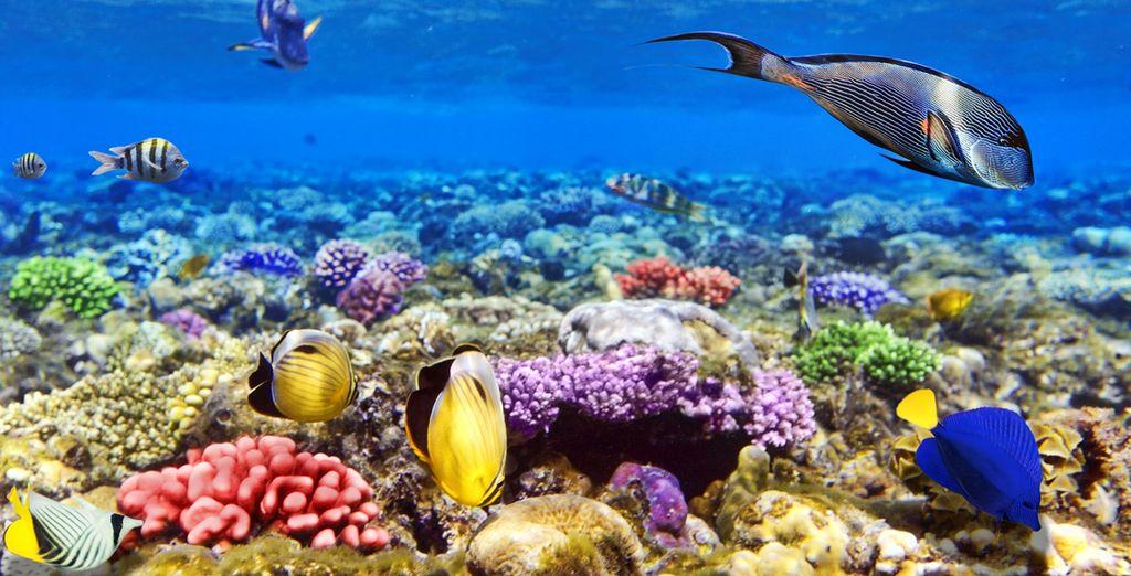 Plongez dans les eaux turquoise... Emerveillement garanti !