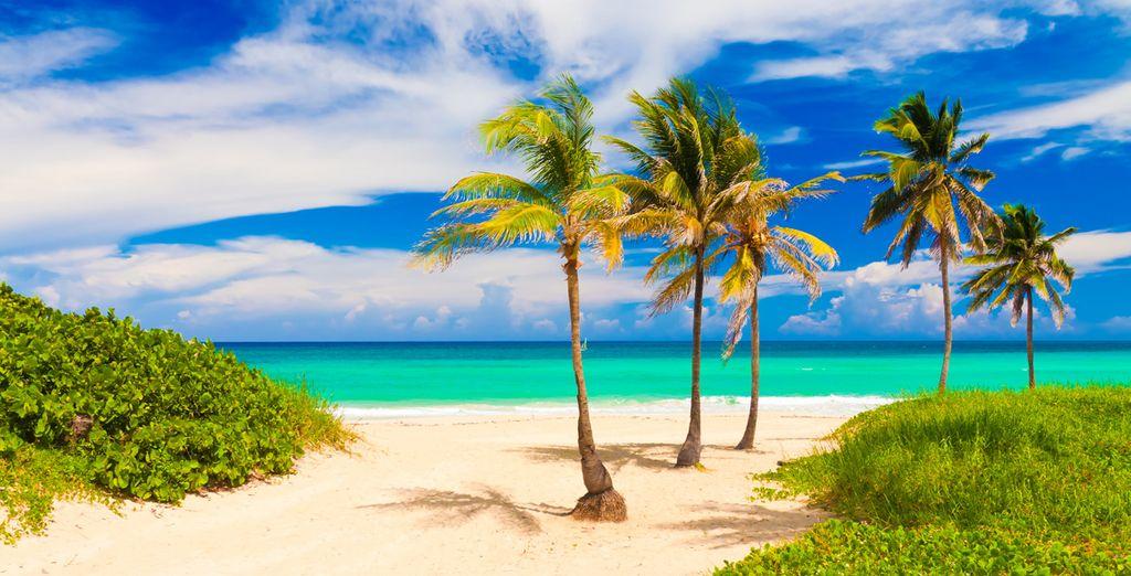 Rejoignez ensuite les plages de sable blanc de Varadero