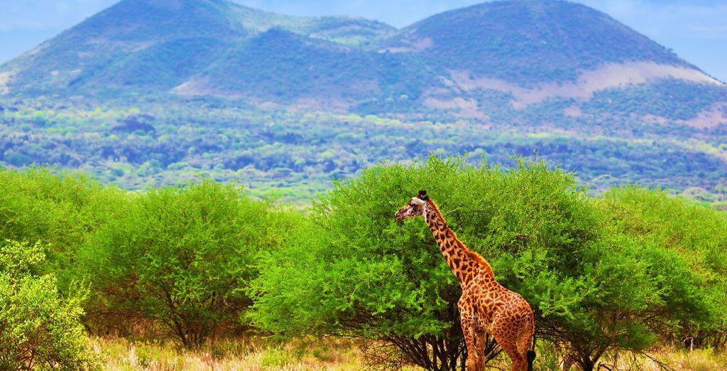 Pour approcher de près la nature sauvage du Kenya