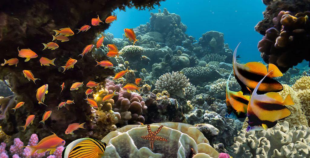 Et les profondeurs marines !