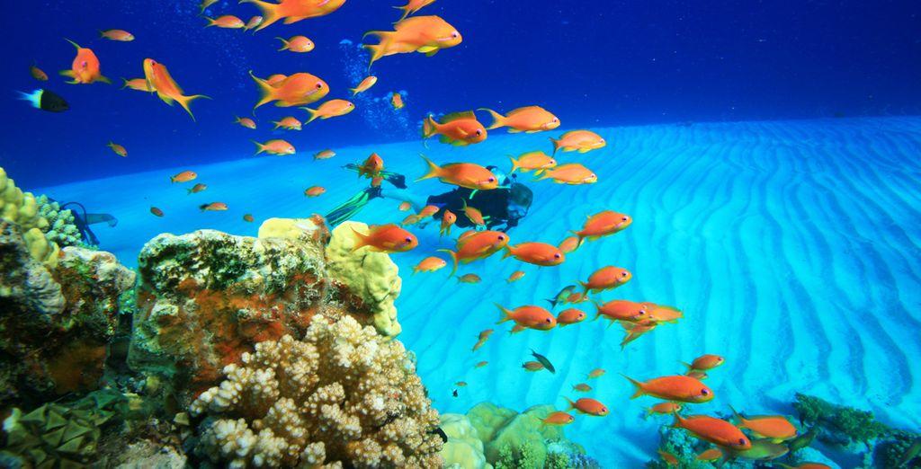 Et terminez en beauté votre combiné au bord de la mer Rouge dans le cadre dépaysant du Steigenberger Golf Resort 5* !
