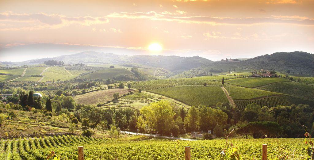 Flânez dans les vignobles italiens...
