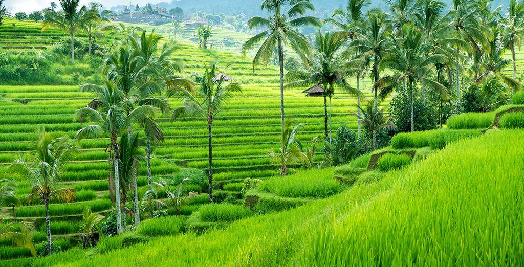 En plein cœur de la région d'Ubud...