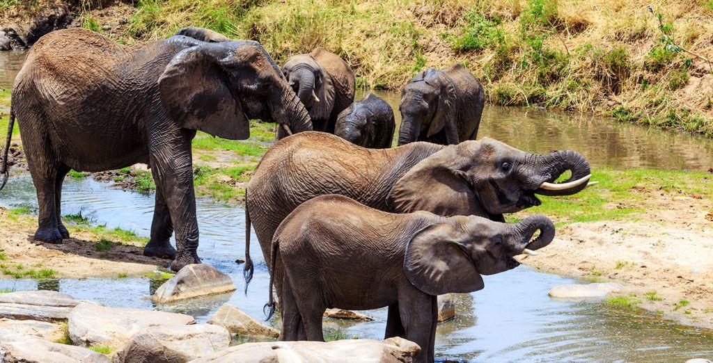 Photographie d'éléphants dans leurs habitat naturel lors d'un safari à Zanzibiar