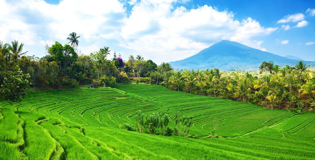 Des paysages naturels de toute beauté...