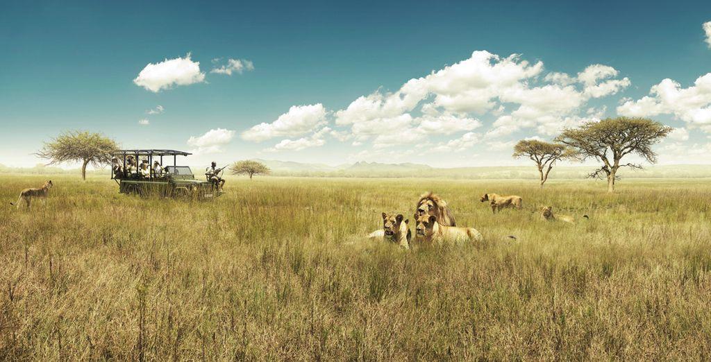 Et parcourez le Parc Kruger