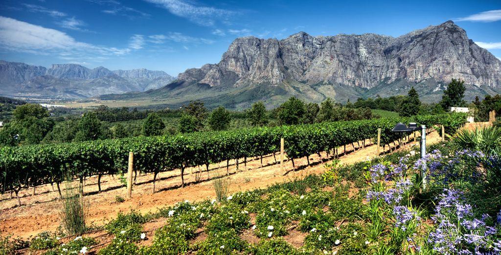 Et découvrez les vignobles de la région