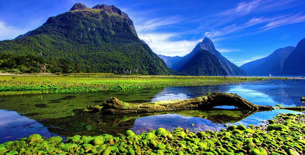 Paysage de la Nouvelle Zélande et parc naturel