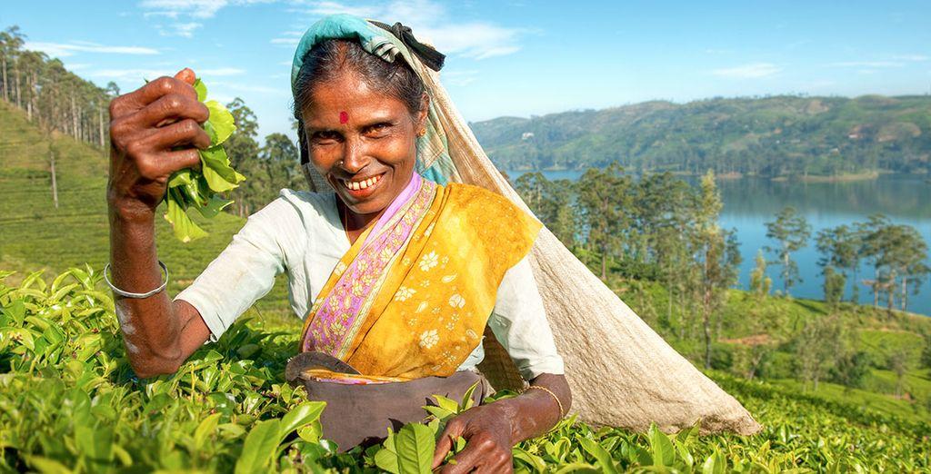 Mais au dela de ça, le Sri Lanka c'est aussi tout une culture qui va du thé...