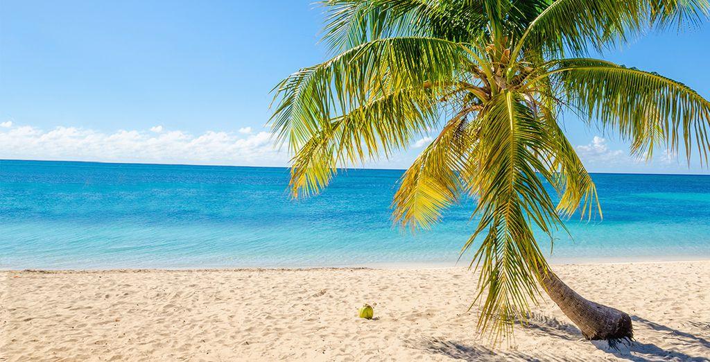 Mettez les voiles, direction : la Guadeloupe !