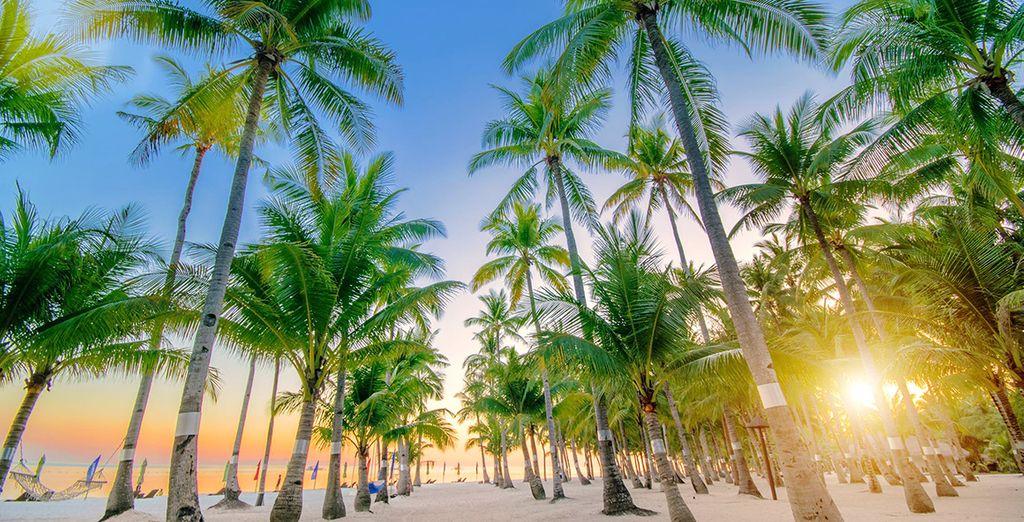 Et rejoindre l'île de Panglao où vous attend le South Palms Resort
