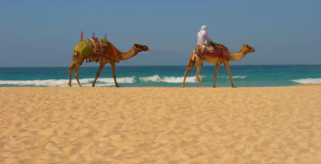 et les longues plages de sable.