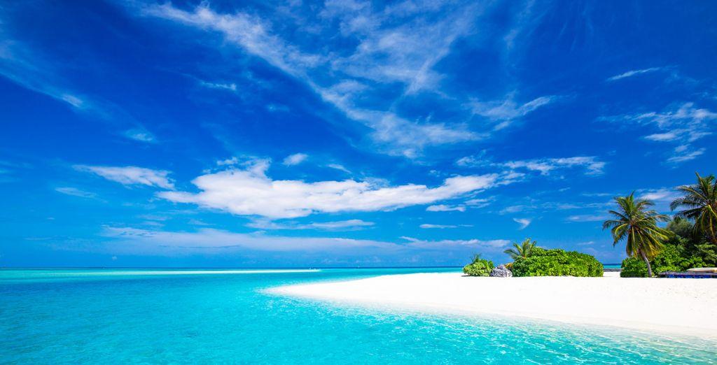 Vivez une idylle au cœur de l'océan