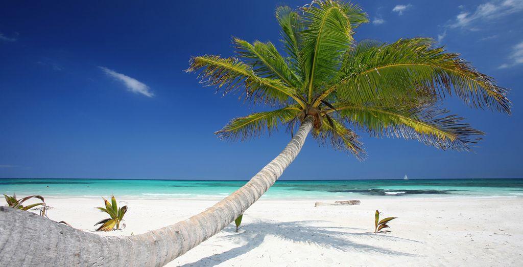 Entre plages paradisiaques