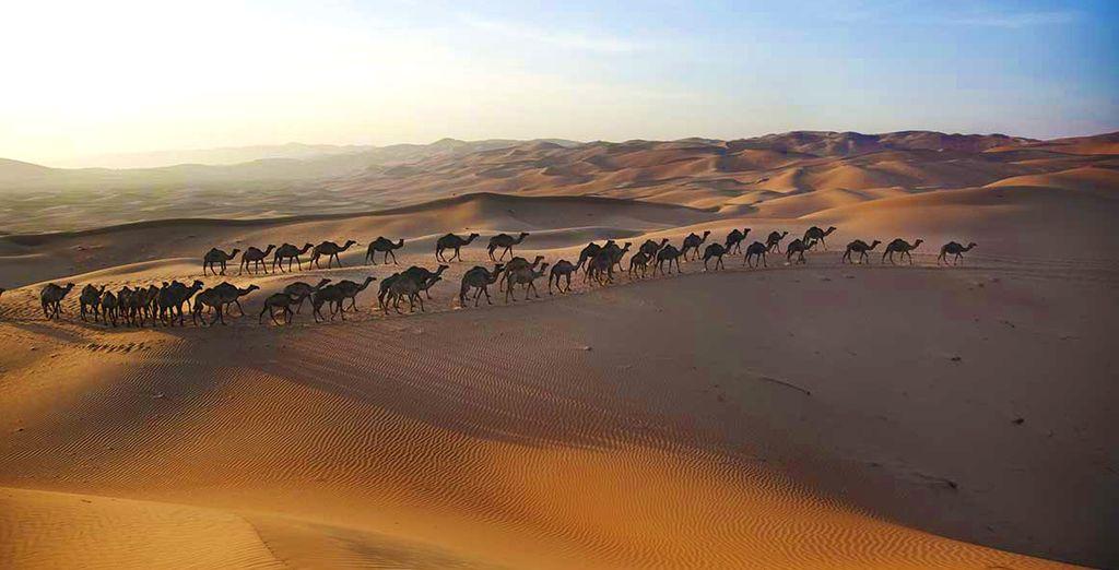 Et l'immensité du désert arabique