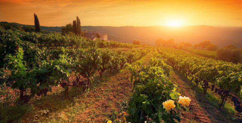 Attention, vous risquez de tomber amoureux de la Toscane...!