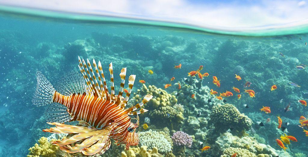 Et découvrez les fonds marins...