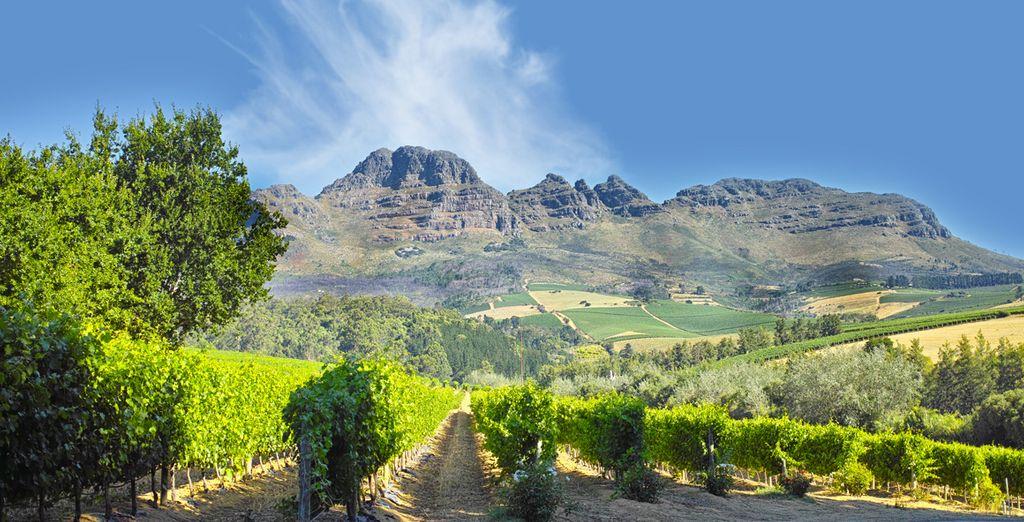 Sillonnerez la belle route des vins