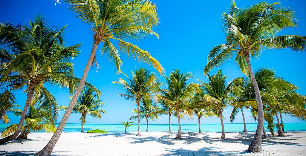 Installé dans la zone exclusive de Cap Cana, au sud de Punta Cana