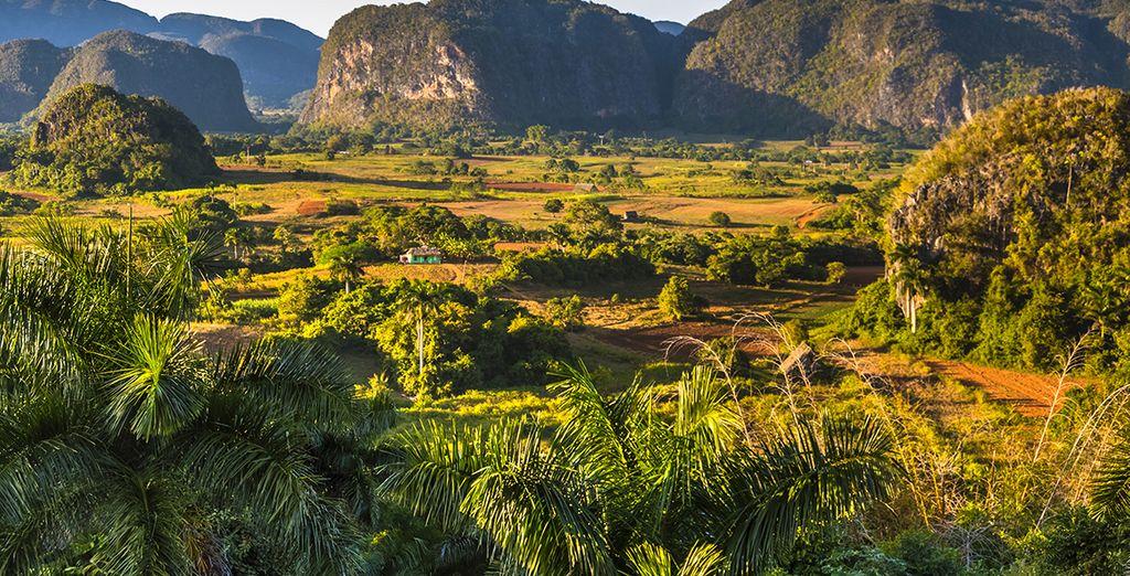 Paysage de la vallée de Vinales à découvrir lors d'un voyage à Cuba