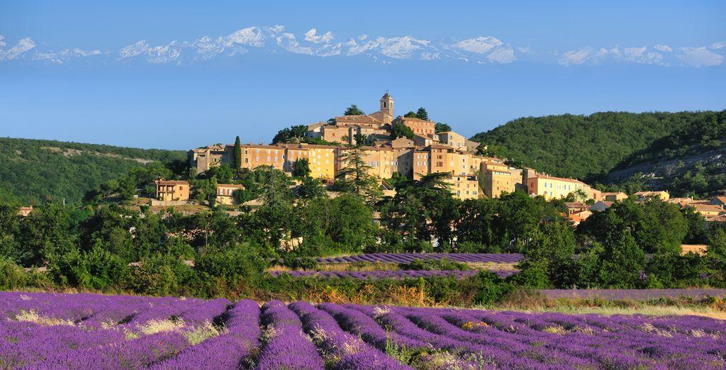 Paysage de la France et ses champs de lavandes