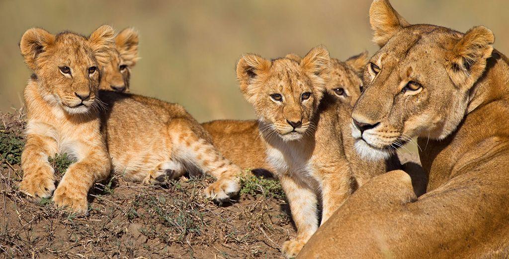 Photographie des animaux du Kenya