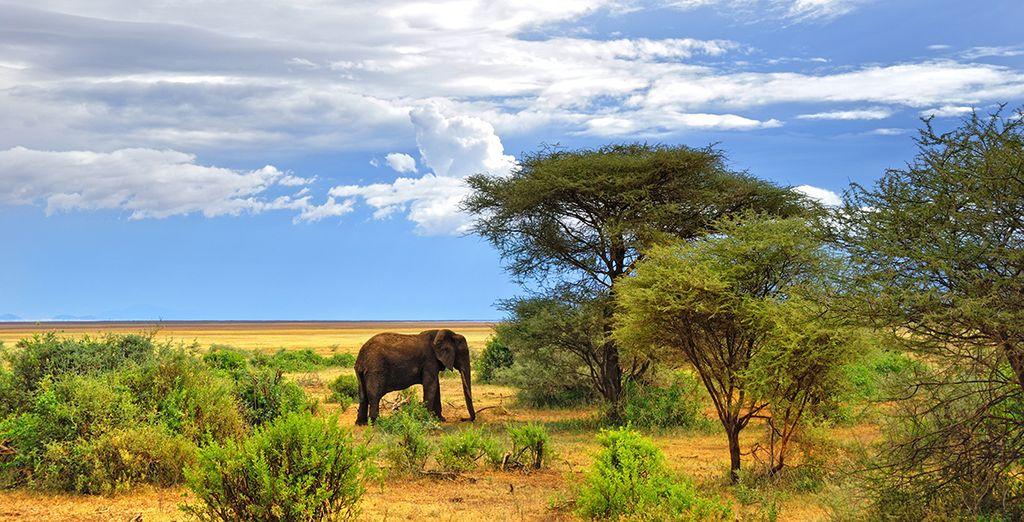 Et à observer les animaux sauvages d'Afrique
