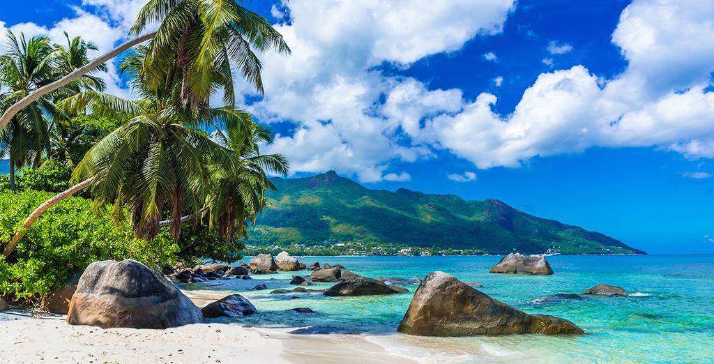 Plage de sable fin, eaux turquoises et palmiers, Seychelles