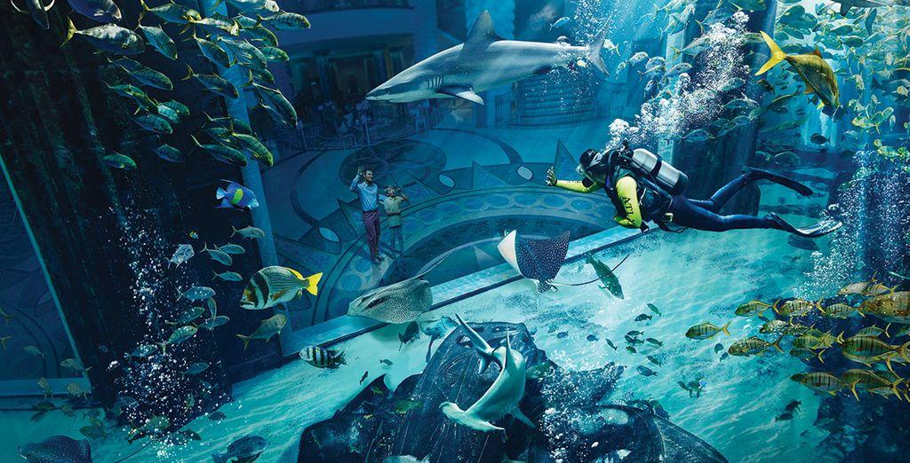 Le grand aquarium du Dubaï Mall