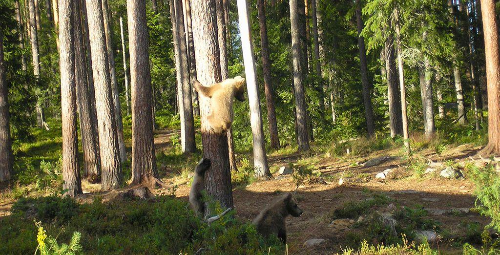Observation de la faune dans son habitat naturel