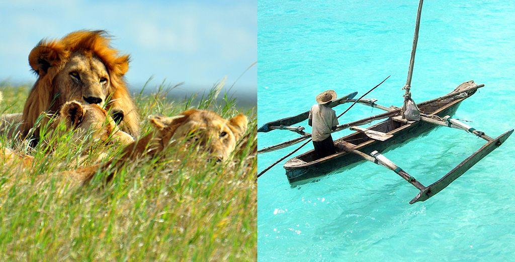 Préparez-vous à vivre une expérience unique - Circuit Tanzanie et archipel de Zanzibar 13 jours / 12 nuits Arusha