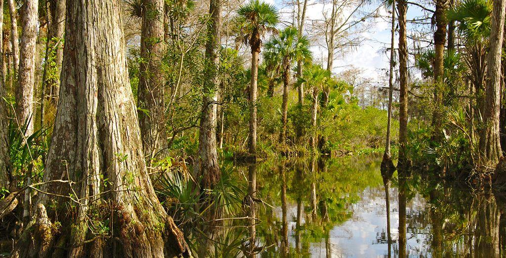 Les Everglades seront un impressionnant rendez-vous