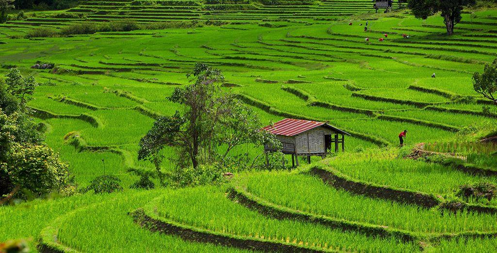 ...et des paysages magnifiques comme à Chiang Mai