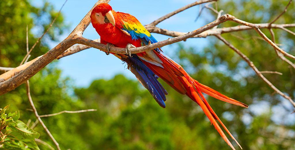 Découvrez les parcs naturels de Panama City