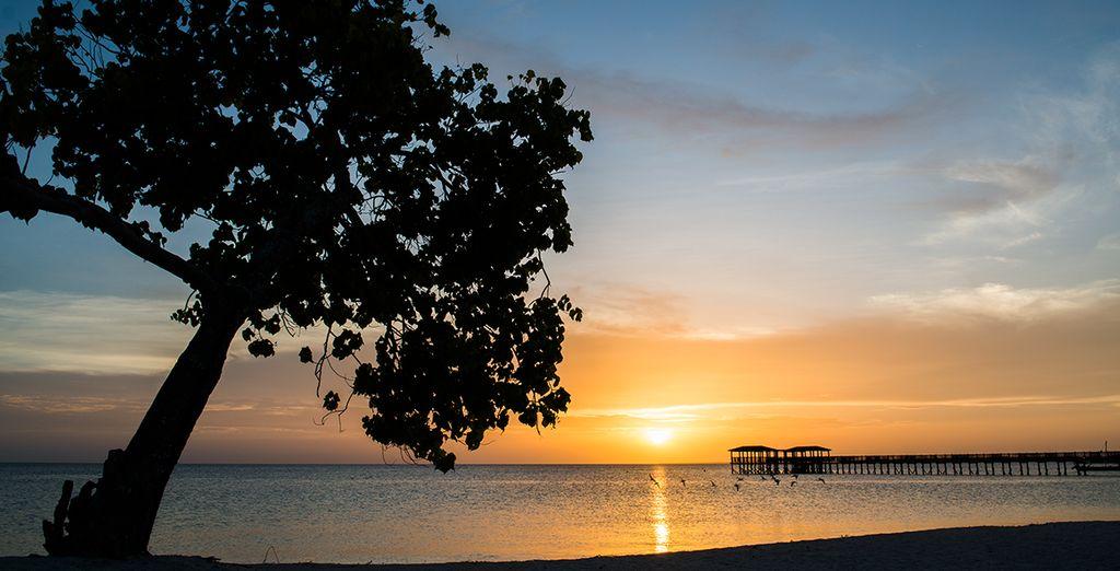 Pour vous émerveiller de la beauté de Zanzibar...