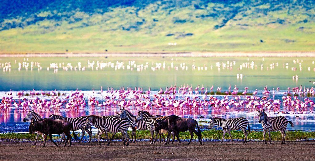 Circuit Combiné Tanzanie et Zanzibar 7 nuits et séjour possible à Dubaï